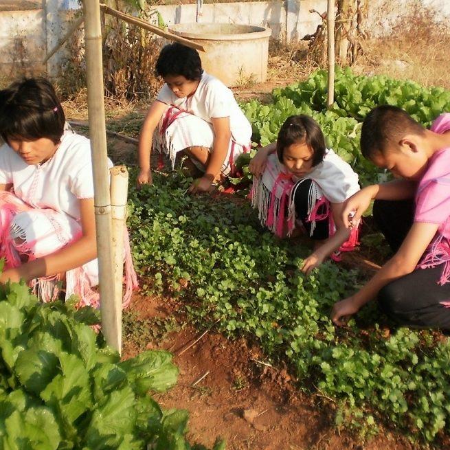 Website SSN Improve Nutrition In Schools E1516330790256
